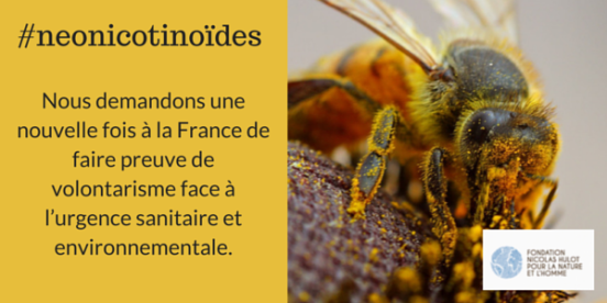 fnh-neonicotinoide